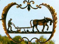 Gasthaus-Pension zum Pflug: Und gegenüber weiden die Bisons