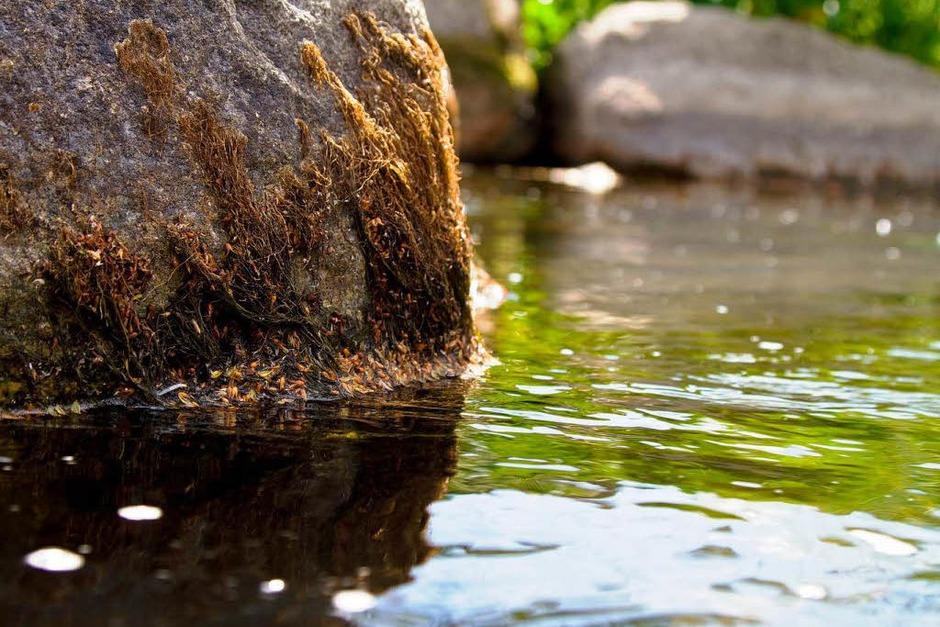 Eher ein Bächle als ein Fluss - die  Dreisam beim E-Werk in Freiburg (Foto: Carlotta Huber)