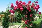 Fotos: Siebter Gartentag in Hartheim