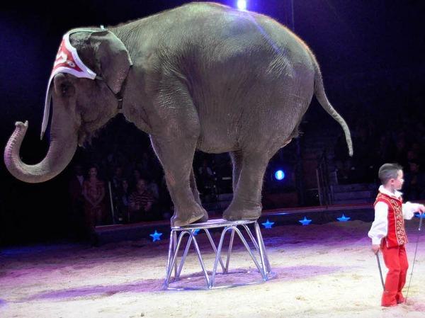 "Impressionen aus ""Vive le cirque"""