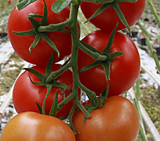 urteilsplatz pepe und die reifen tomaten lahr. Black Bedroom Furniture Sets. Home Design Ideas