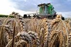 Fotos: Das Getreide ist geerntet