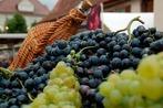 Fotos: Weinfest in Wolfenweiler