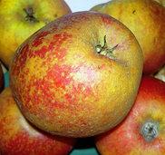 Der Apfel - welche Sorte passt zu mir?