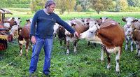 Scheunenstrauße in Waltershofen: Die Rinder sind eine Rarität