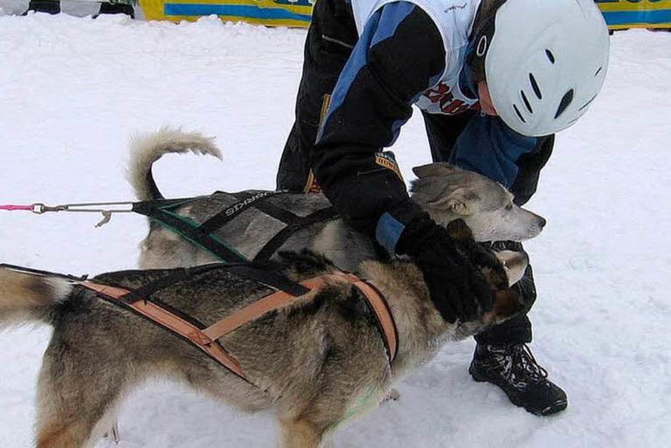 Impressionen von den Schlittenhunderennen in Todtmoos (Foto: Christiane Sahli)