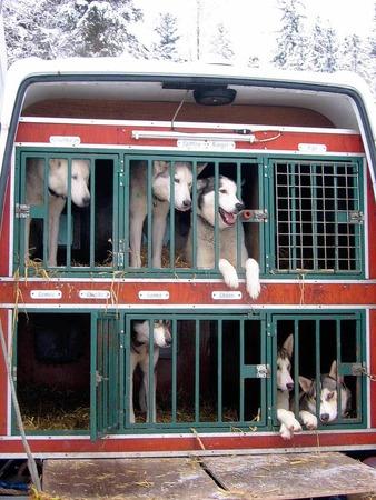 Impressionen von den Schlittenhunderennen in Todtmoos