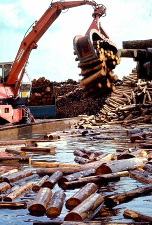 Grundstoff Holz