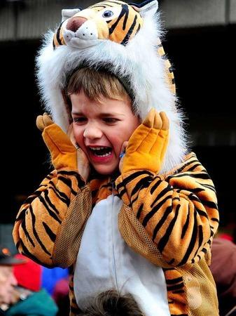 Tiger Jakob  faucht die Hästräger an
