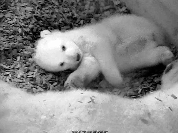 Eine Kamera dokumentiert das Leben in der Mutter-Kind-Höhle.