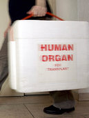 Kritik an Stiftung f�r Organspenden