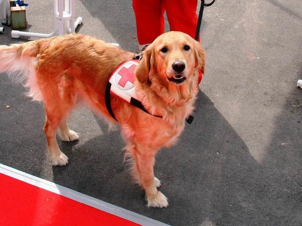 Eines von 24 Teams der Rettungshundestaffel.