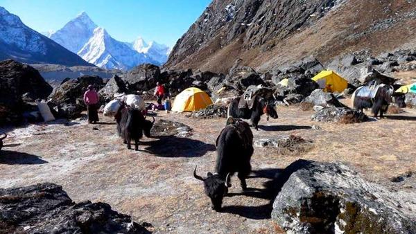 Vor dem Abmarsch ins Basislager  am Mount Everest: Die Yaks am frühen Morgen.