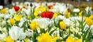 """Herzstück der Landesgartenschau, die unter dem Motto """"Grüne Urbanität"""" steht, sind die zwölf wechselnden Blumenschauen in der stillgelegten Anker-Brauerei."""