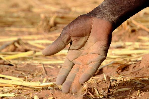 Vertrockneter, sandiger Ackerboden in Mali während der Dürre im März. Wegen der schlechten Regenzeit im Herbst wurde hier nichts geerntet.