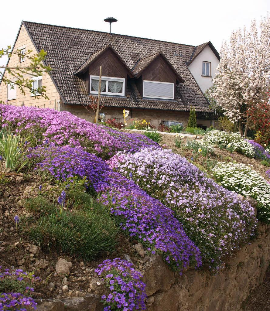 Garten stauden nicht nur nach der farbe w hlen kreis for Garten stauden