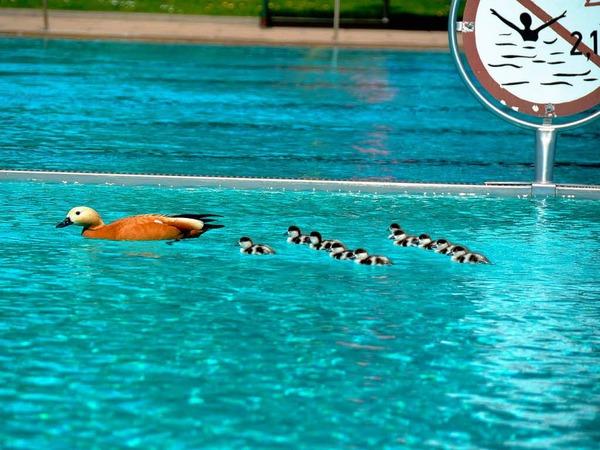 Badespaß für die ganze Familie...