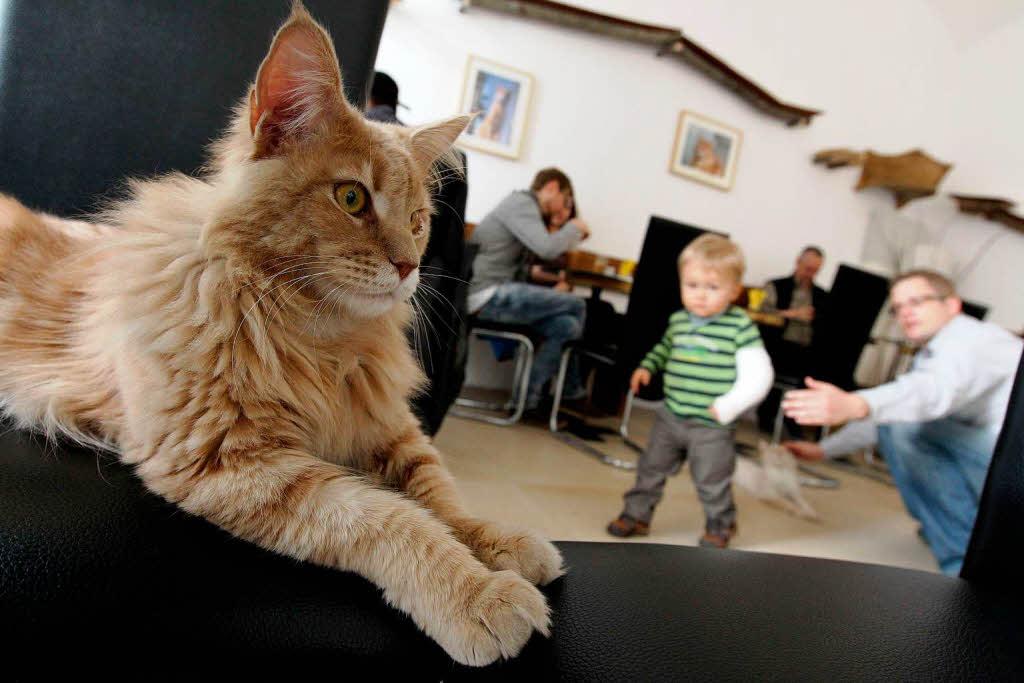 Katzen-Café in Wien: Schmusen beim Heißgetränk - Panorama