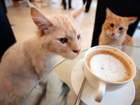Katzen-Caf� in Wien: Schmusen beim Hei�getr�nk