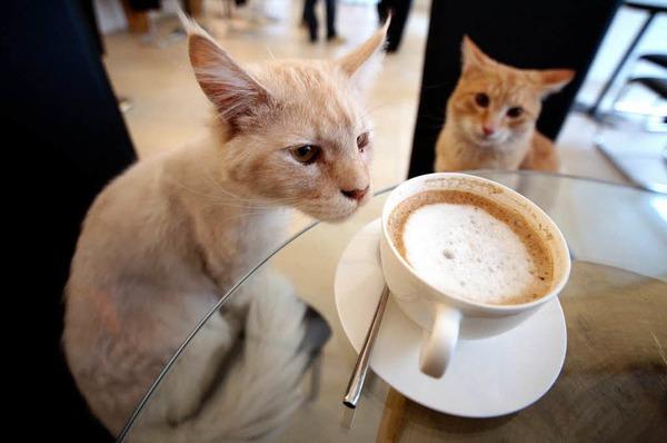 Die Katzen bewohnen das ganze Katzencaf�, das jetzt neu in Wien er�ffnet hat.