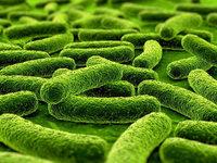 Bakterien m�gen M�nner mehr als Frauen