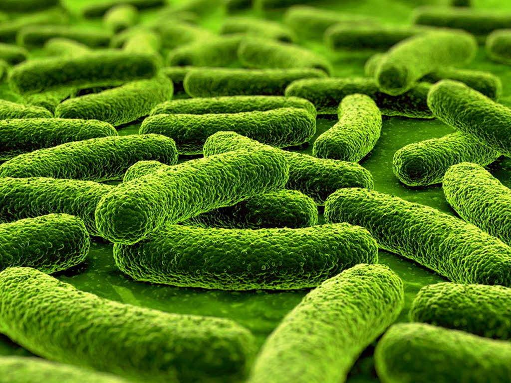 Bakterien mögen ungewaschene haut foto fotolia com zentilia