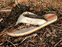 Rheinschuh – die Datenbank f�r angeschwemmte Schuhe