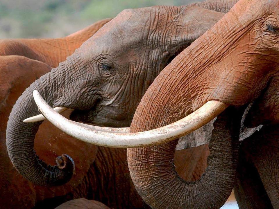 Die sanften Tiere brauchen Hilfe.   | Foto: DPA