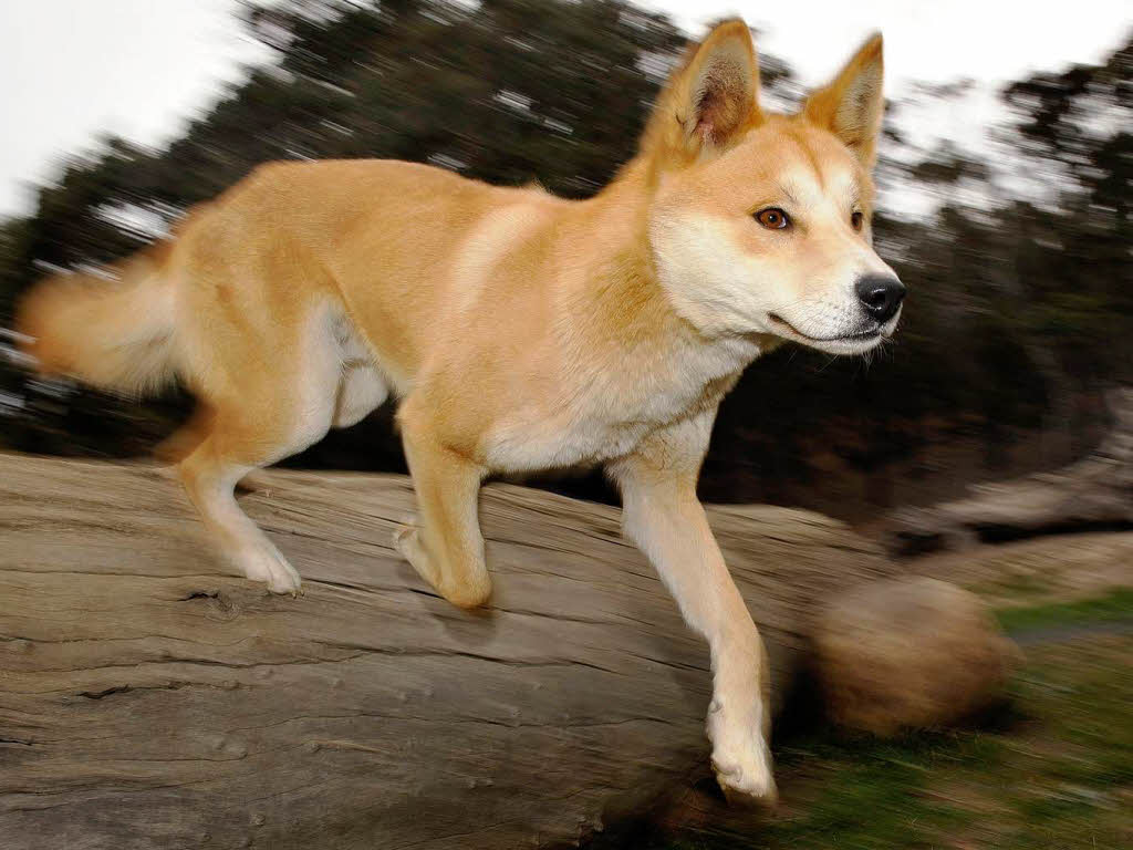 Hybrid Dogs For Sale Philippines