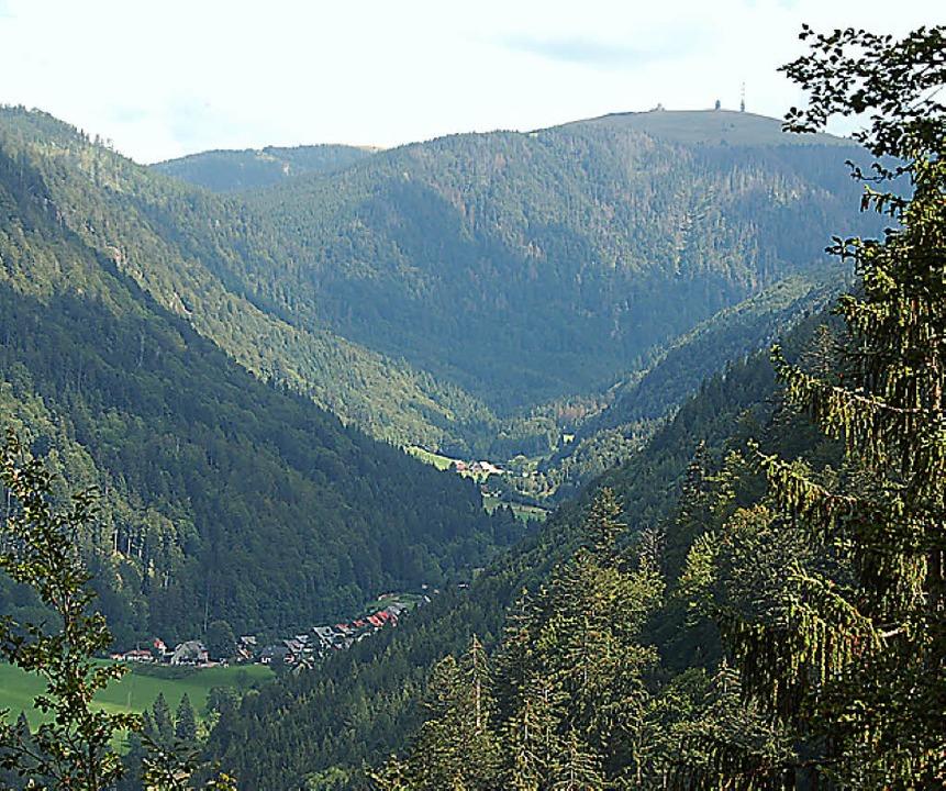 Einfach zuwachsen lassen? Das St.-Wilhelmer Tal am Fuße des Feldbergs.   | Foto: Scherfling (Archiv)