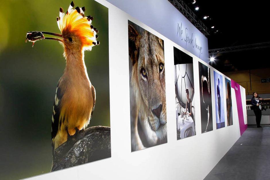 Fotos der Firma Canon im Großformat (Foto: dapd)