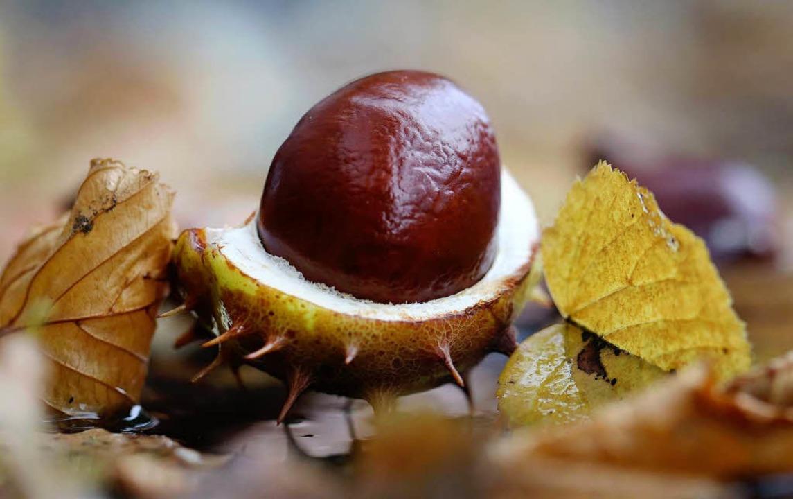 Mit Kastanien und Herbstblättern kann man viele tolle Dinge basteln.  | Foto: dpa