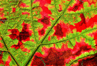 Fotos: Goldener Herbst in Deutschland