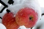 Fotos: Erster Schnee im Oktober