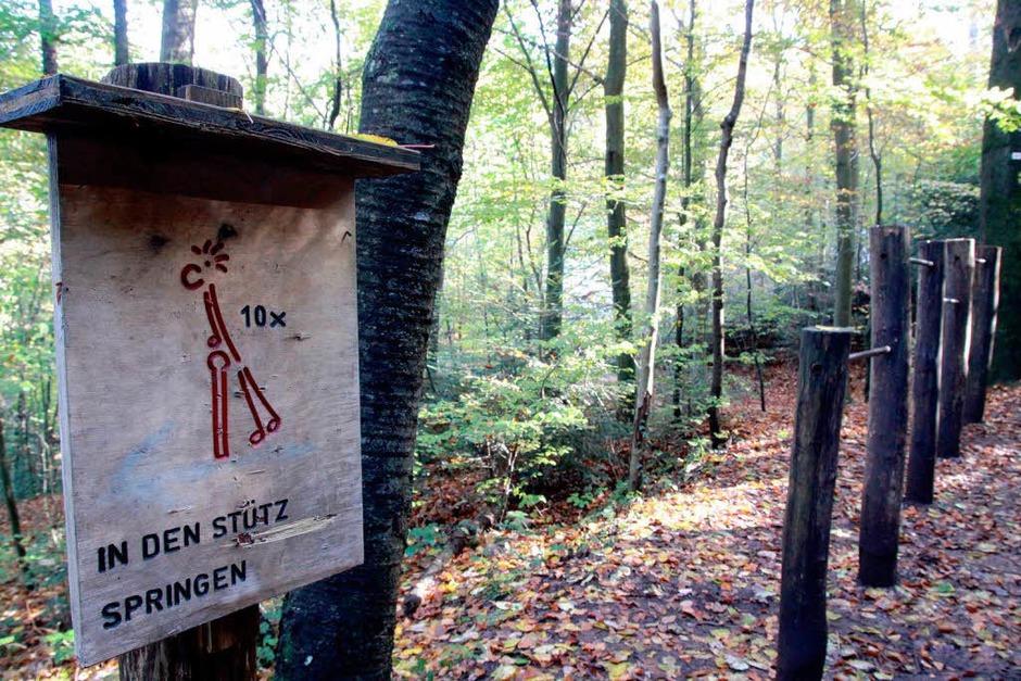 Der Klassiker: der Trimm-Dich-Pfad im Sternwald in Freiburg (Foto: Max Schuler)