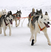 Haftstrafe f�r Hundet�ter in Kanada