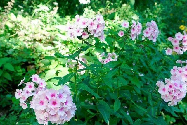 Im duftenden Kräutergarten