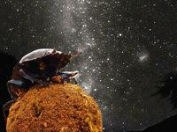 Insekten nutzen Sternenlicht zur Orientierung