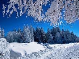 Leserfotos: Grüße aus der Kälte