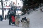 Die Todtmooser Schlittenhunderennen 2013