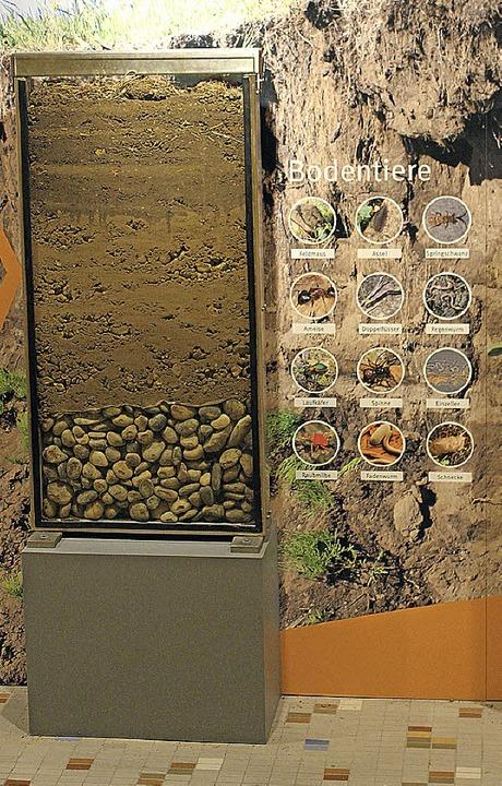 Ein vereinfachtes Modell des Bodens.   | Foto: Wollseifen (3)/IWB