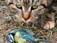 Steuer für Vogelkiller? Ornithologe fordert Abgabe für Katzenhalter