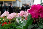 Fotos: Geranienmarkt in Rheinfelden