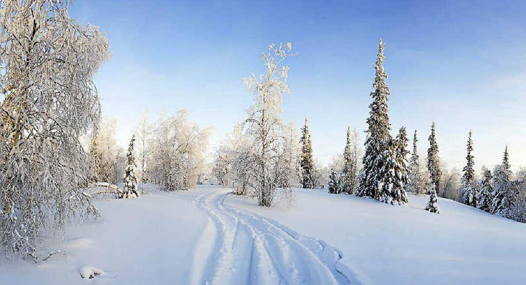 Gartenmobel Auflagen Rattan : Birkenwälder und endlose Felder Sibirien  Foto andrey snegirev