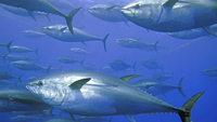 EU will mehr Schutz f�r die Fische