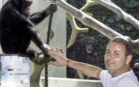 Affenpfleger über die Arbeit mit unseren engsten Verwandten