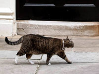 Katze Freya: Spionin auf Samtpfötchen?