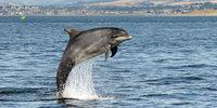 Delfine rufen sich mit Namen