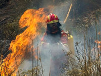 Feuer wüten auf Mallorca, Rhodos und Kreta