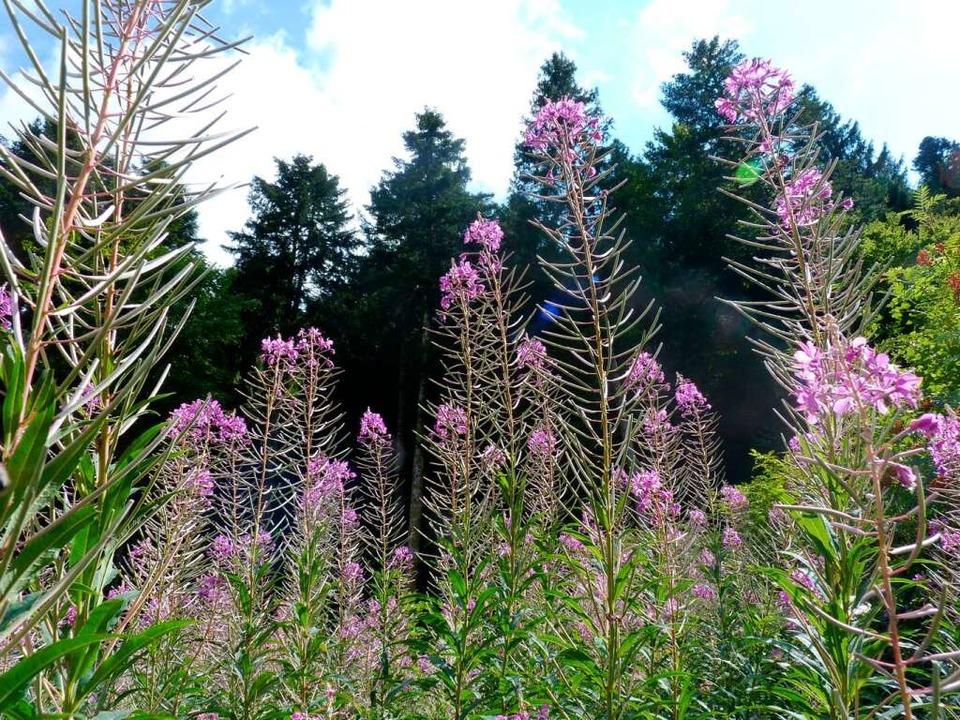 Eine Fülle von Pflanzen charakterisiert die Landschaft    Foto: Dirk Sattelberger